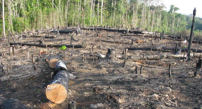 Rezultat krčenja šuma